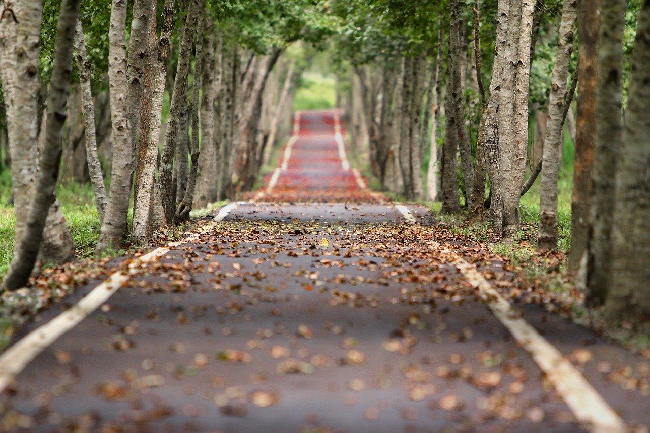 Veilig rijden in de herfst en winter